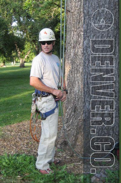 Getting Ready yo Climb a tree for Pruning