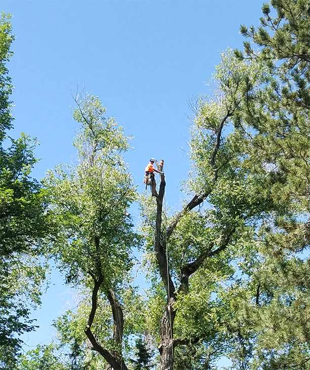 Timber! Large Tree Removal